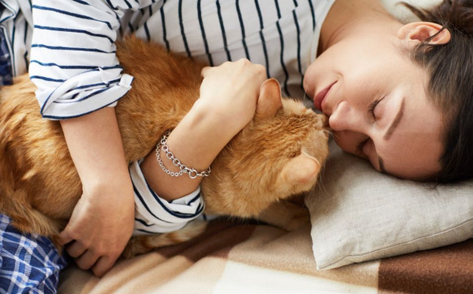 Se tiene la creencia de que los gatos son huraños e indiferentes debido a que no son tan expresivos como los caninos (Especial)