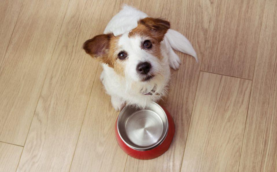 Hay que tener en cuenta que cada etapa de la vida de la mascota tendrá diferentes necesidades fisiológicas (Freepik)