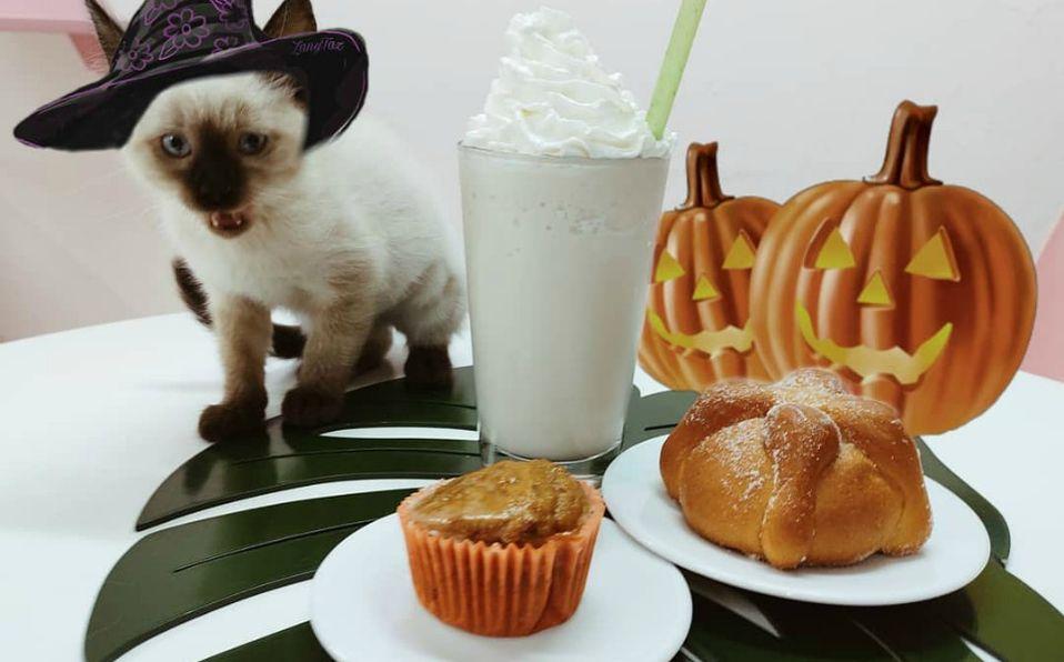 Neko-Hi! Cafe (Cortesia)