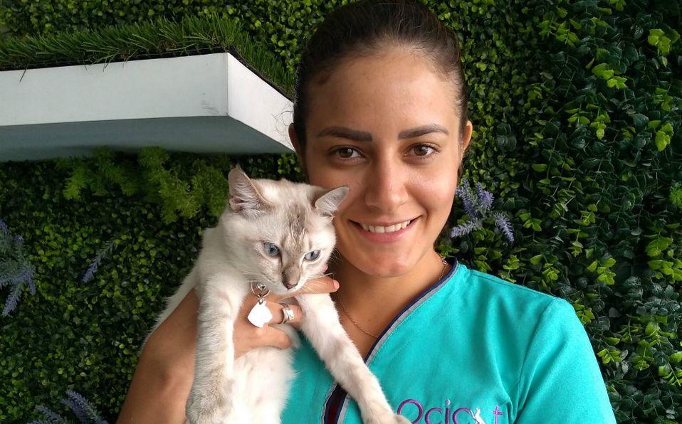 La MVZ Sonia Lomelín de Ocicat Clínica Felina aborda el síndrome del gato-tigre (Cortesia)