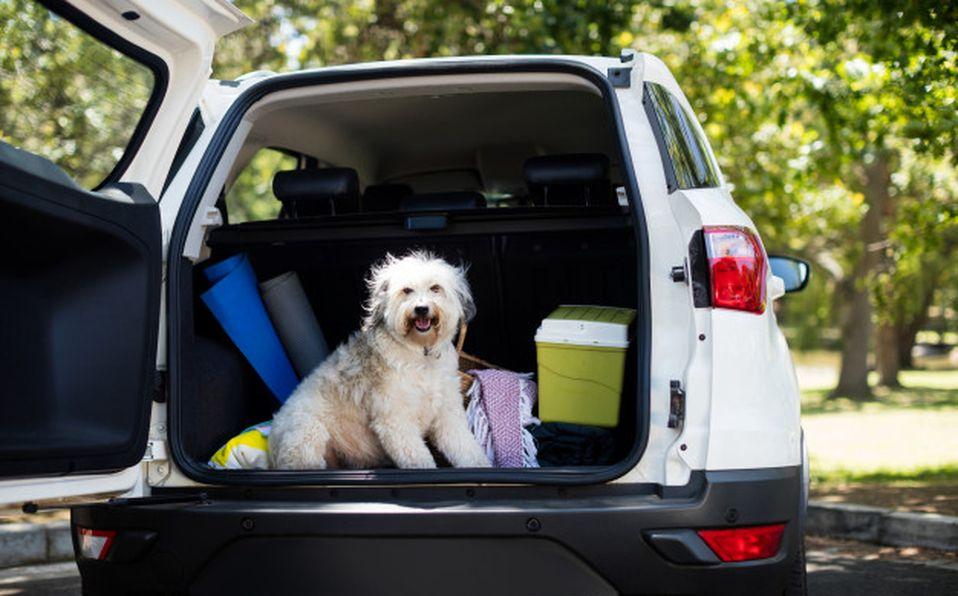 Al generar un plan de emergencia no olvides incluir a tu mascota (Especial)