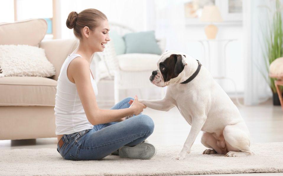 En la última década la obesidad en perros ha aumentado 40% en nuestro país (Especial)